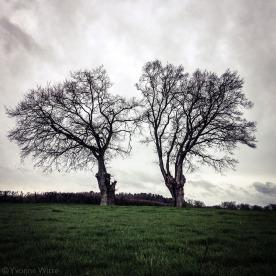 nostalgia-arbressolitaires_yw_2196