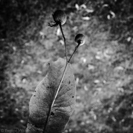 nostalgia-bladzwwit_yw_9561
