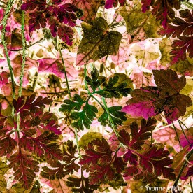 nostalgia-leaves_6879