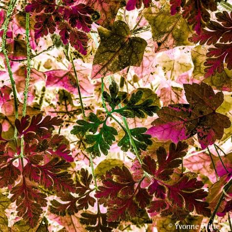 nostalgia-leaves_6879