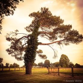 nostalgia-tree_6016